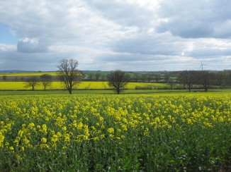 Rapeseed fields high up in the Cotswolds