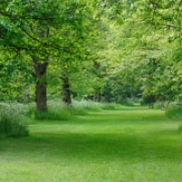 Grass ~ Haiku