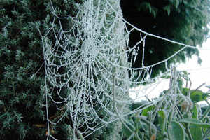 frosty spiders web