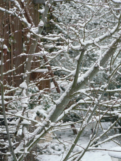 Frozen branches in Benhall Woods