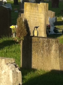 Woodpecker on  gravestone