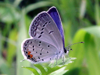 butterfly-eating