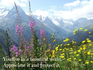 It is a beautiful world.  Appreciate it and protect it