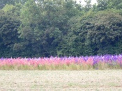 confetti fields 1