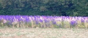 confetti fields 3