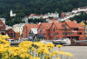 Wild flowers in Bergen