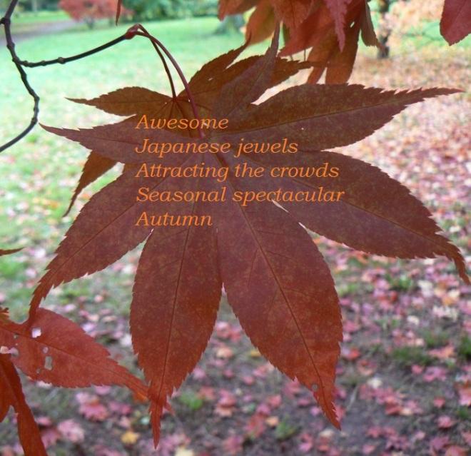 Autumn Leaf Blog