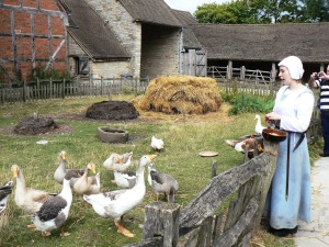 Feeding the geese at Mary Arden's House