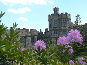 Rhododendrons at Warwick Castle