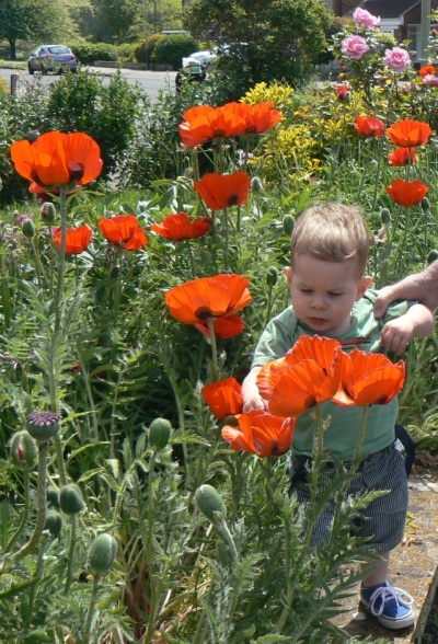 Lost in the poppies