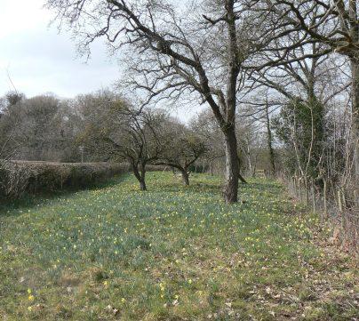 Gwen and Vera's Field 1