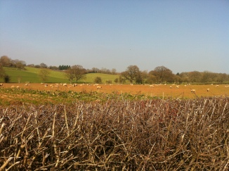 other side of farming in Upleadon