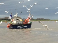 fishing boat with seagulls