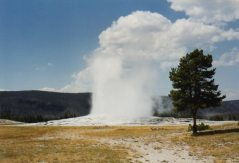 close up geyser at yellowstone