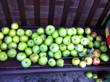 Bramley cooking apples