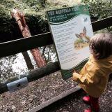 The Gruffalo Trail