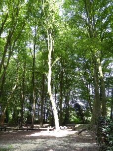 Benhall bleached bark
