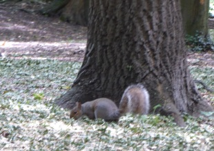 Benhall Squirrel