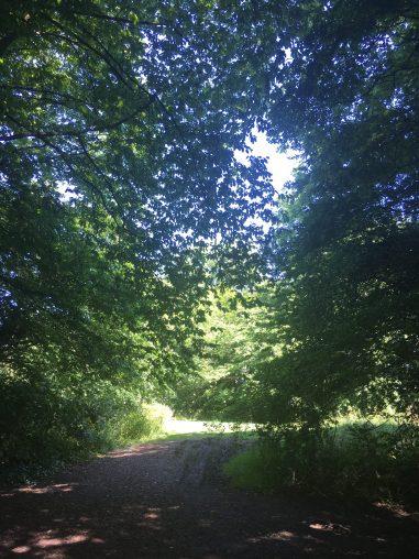 Benhall Woods 6