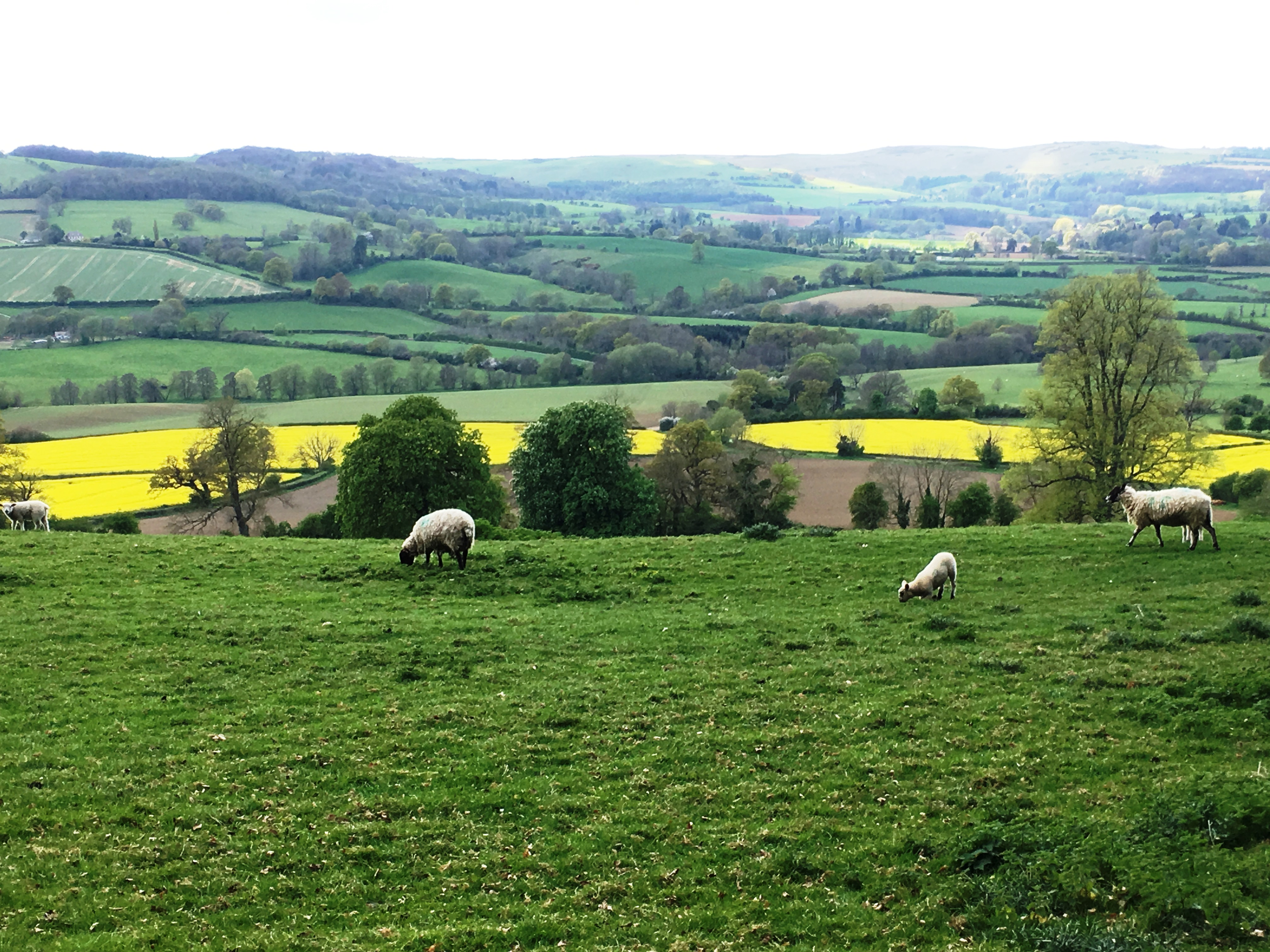 Cotswold Spring2