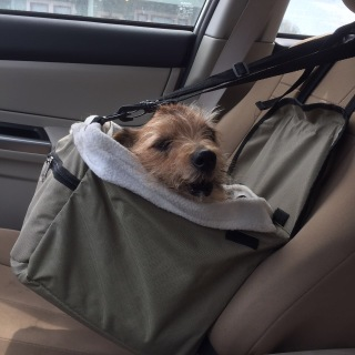 Wags has his own car seat