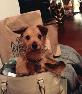 Wags in a handbag