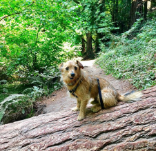 Wags in the woods