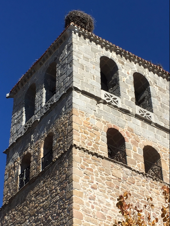Storks nest on top of church tower