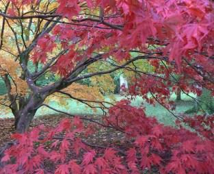 autumn blog 5