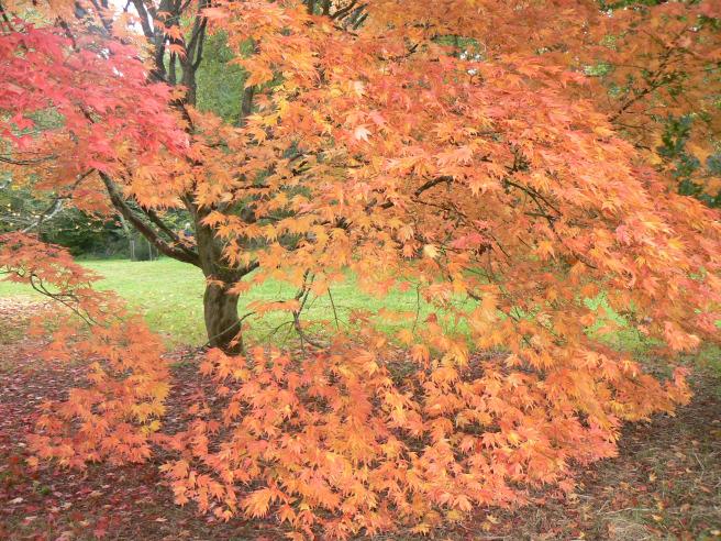 autumn blog best