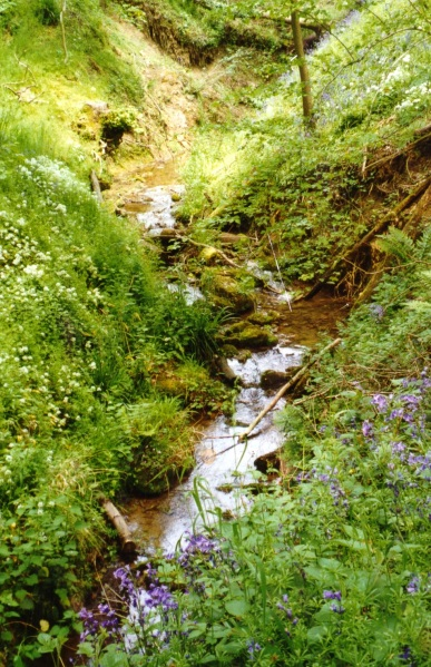 River Chelt near its source at Dowdeswell with bluebells